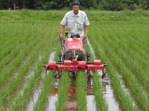 無農薬栽培