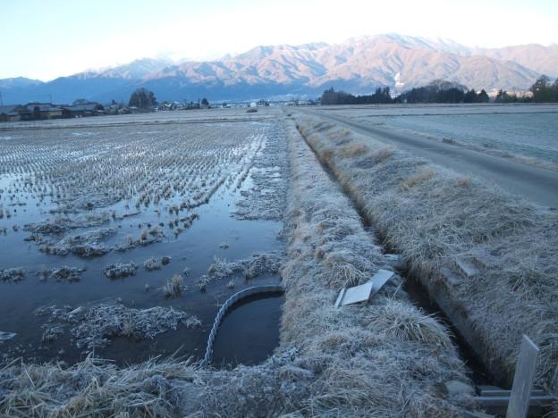 冬期湛水田に霜