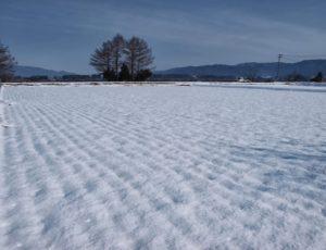 冬の田んぼ